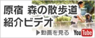 原宿森の散歩道 紹介ビデオ